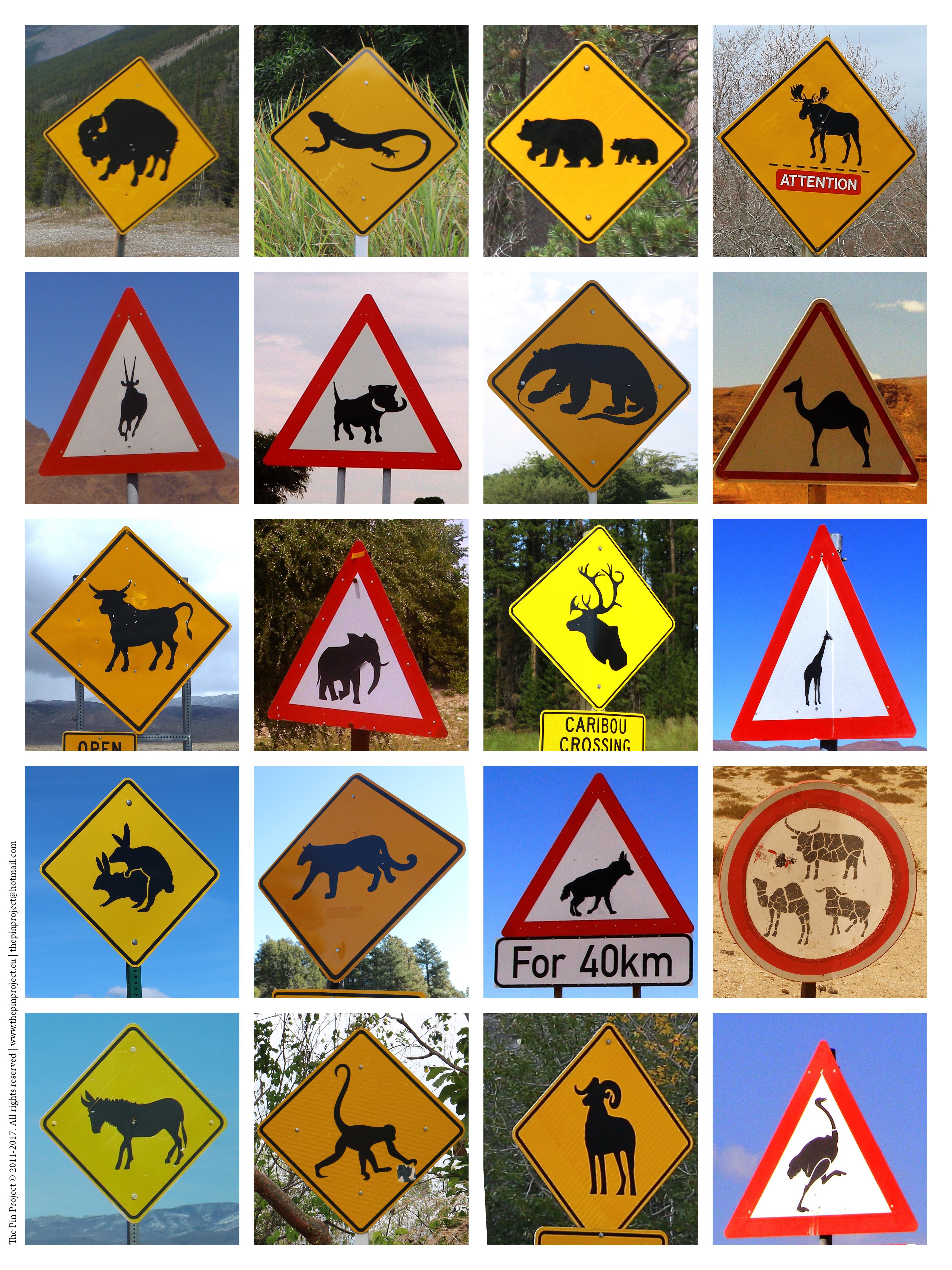 road wildlife